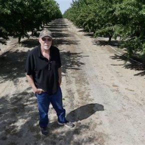 Almonds get roasted in debate over California wateruse