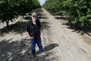 """In this Tuesday March 31, 2015 photo, almond grower Bob Weimer poses in his almond orchard near Atwater, Calif.  As California cities and towns move to mandatory water cutbacks in the fourth year of extreme drought, the state's $6.5 billion almond crop has claimed the spotlight as """"the poster child of all things bad in water"""" in the country's top agriculture state. At 1 gallon per almond, California's almond crop is now consuming about 10 percent of all the water that Californians are using in the drought. (AP Photo/Rich Pedroncelli)"""