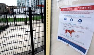 FILE - In this April 16, 2015, file photo, a sign warning of canine respiratory illness is posted at a dog park in Chicago. An outbreak of canine flu has sickened more than 1,000 dogs in the Midwest, killing several and stirring concern among animal lovers nationwide that the highly contagious virus will sideline their pets. (AP Photo/M. Spencer Green, File)