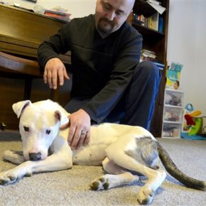 Miracle dog' survives being hit by car, clubbed,abandoned