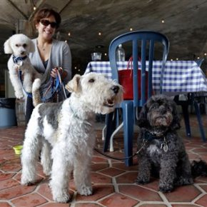 Fido al fresco? NY weighs allowing outdoor dining withdogs