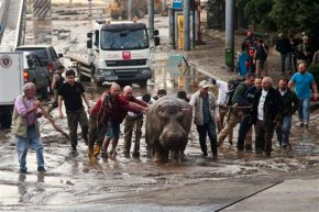 Zoo animals escape amid flooding in former Sovietrepublic