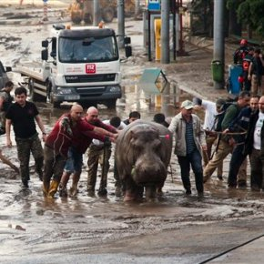 Zoo animals escape amid flooding in former Soviet republic