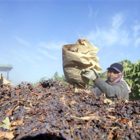 High court says gov't seizure of raisins is unconstitutional