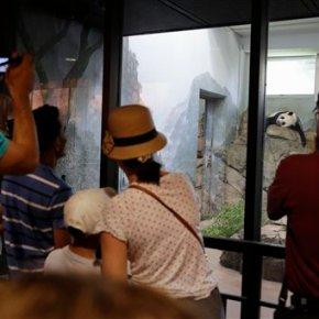 It's panda-monium! National Zoo says Mei Xiang hastwins
