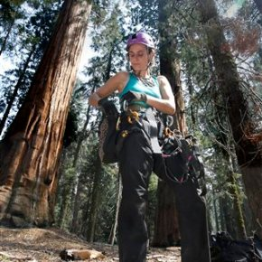 Scientists: Drought stressing California's Giant Sequoias