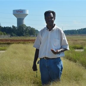 University professor testing foreign grain in Virginia soil