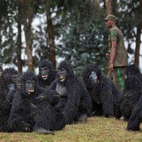 Rwanda names 24 baby mountain gorillas in annualtradition