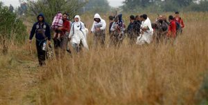 Migrants make their way through fields and meadows in the early morning after crossing the Serbian-Hungarian border near Roszke, southern Hungary, Friday, Sept. 11, 2015. EU officials and human rights groups say they've been disappointed by the animosity toward asylum-seekers in countries from which hundreds of thousands of people fled communist dictatorships just decades ago. (AP Photo/Matthias Schrader)