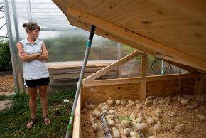 Liberty University raises chickens at its CampusFarm