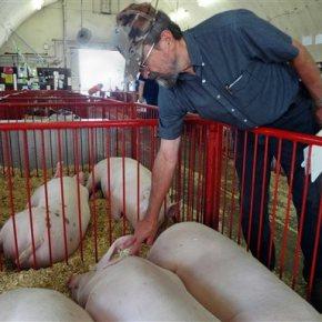 USDA: Pig virus that struck US similar to Chinastrain