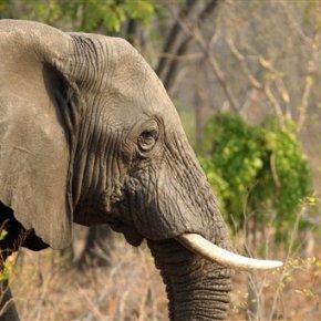 Zimbabwe: 14 elephants killed by cyanidepoisoning