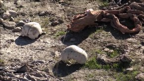 Iraqis find 3 more mass graves in formerly IS-heldSinjar