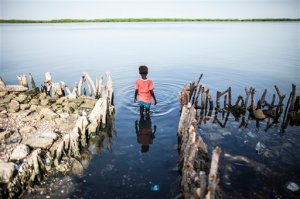 In this photo taken Sunday, Oct. 18, 2015, a young girl wades in the water outside of Fatou Faye's home in Diamniadio Island, Saloum Delta  in Senegal. The place where Fatou Faye's kitchen once stood is now outlined with short branches of mangroves that she hopes will slow the nearby sea from destroying the rest of her house. The rising sea levels pushing into the waters of Senegal's Saloum Delta already threaten to carve the rest of her gray cement home from its foundation, leaving her and 30 other relatives homeless on low-lying Diamniadio island. (AP Photo/Jane Hahn)