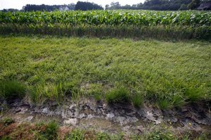 FILE - In this June 11, 2015 file photo, a dry water ditch is seen next to a corn field in Cordova, Md. Despite White House objections, the Senate voted for a resolution Nov. 4, to scrap new federal rules to protect smaller streams, tributaries and wetlands from development and pollution. (AP Photo/Alex Brandon, File)