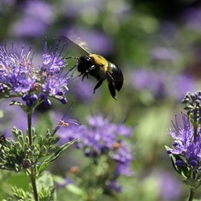 Pesticide-makers point to other culprits in bee die-offs
