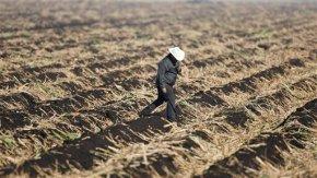 Sugar program draws Cruz's ire, remains popular inCongress