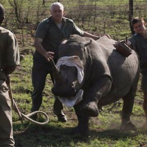 Prince Harry sees carcasses of rhinos in South African park