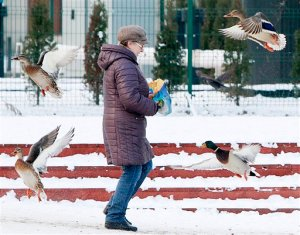 A woman feeds ducks in a park in Warsaw, Poland, Wednesday, Jan. 20, 2016, as snow and a deep freeze have settled over Central Europe. Temperatures fell to minus 6 Celsius (21 Fahrenheit) in Warsaw on Wednesday. Elsewhere in Central Europe, winter weather is making the journeys of migrants into Europe more difficult, but apparently not weakening the determination of those seeking asylum in Western Europe. (AP Photo/Czarek Sokolowski)