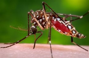Jamaica advises women to delay pregnancy due to Zika virus