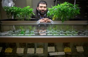 California marijuana growers face new crop of local bans