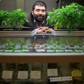 California marijuana growers face new crop of localbans