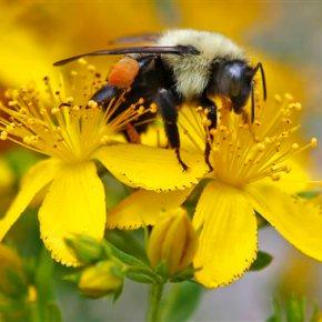 UN science report warns of fewer bees, otherpollinators