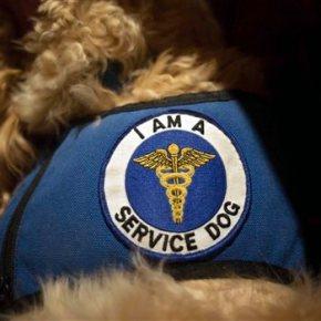 Sorry, no kangaroos: Service-animal impostors facecrackdown