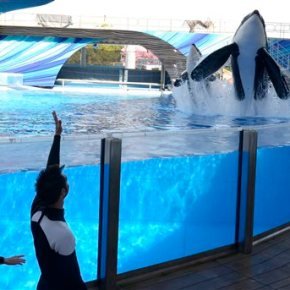 SeaWorld-Killer Whale Breeding