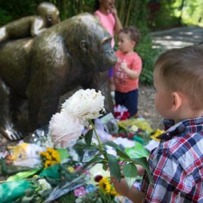 Watchdog group wants Cincinnati Zoo heldresponsible