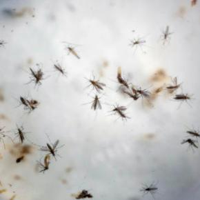 Senate likely to advance $1.1 billion in Zika funding
