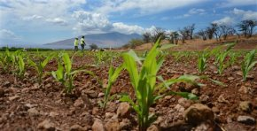 Rules on GMO crops in Hawaii heads to US appeals court