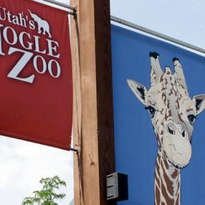 Leopard escapes at Utah zoo; visitors take shelter