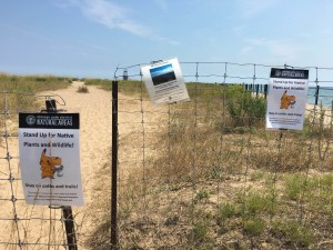 In this Aug. 10, 2016 photo, signs are posted asking Pokemon Go players to stay on the path instead of walking through the grass to protect wildlife at the Loyola Dunes area on Chicago's lakeshore. The protected dunes have become a popular hot-spot for Pokemon Go players. The heavy foot-traffic has raised concerns about environmental damage and inspired an Illinois state lawmaker to propose legislation to require removal of certain places from the game. The bill is one of the first of its kind in the US. (Jacob Wittich/Sun Times via AP)