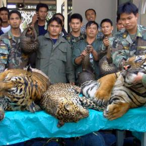 Laos promises to phase out tigerfarms