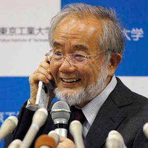 Japanese scientist wins Nobel for study of cell recycling