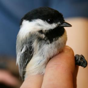 Long, curved, akimbo: Hope uncovered for bird beak deformity