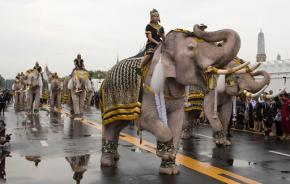 White elephants, mahouts pay respects to late Thaiking