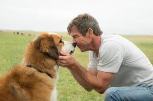 "This image released by Universal Pictures shows Dennis Quaid with a dog, voiced by Josh Gad, in a scene from ""A Dog's Purpose.""  A spokesman for American Humane said Wednesday, Jan. 18, 2017 that it has suspended its safety representative who worked on the set of the film when a frightened German shepherd, not shown, was forced into churning waters. (Joe Lederer/Universal Pictures via AP)"