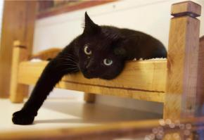 To declaw cats or not? New Jersey could be first withban