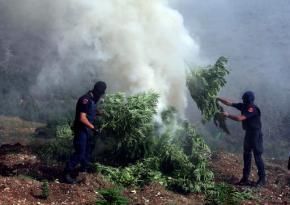 Albanian police find ton of marijuana hidden underhouse