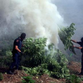 Albanian police find ton of marijuana hidden under house