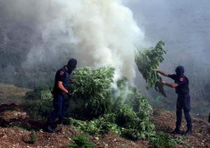 FILE- In this file photo taken on Thursday Aug. 25, 2015, masked police officers burn cannabis plants in Kurvelesh commune, 200 kilometers (125 miles) south of the Albanian capital, Tirana. Authorities in Albania say they destroyed about 2.5 million marijuana plants last year, four times more than the year before.  (AP Photo/Hektor Pustina, File)
