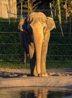 Packy, Oregon's beloved elephant, dies at54