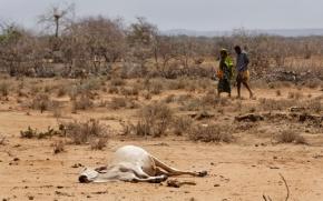 Desperate herders lose animals, hope amid drought inKenya