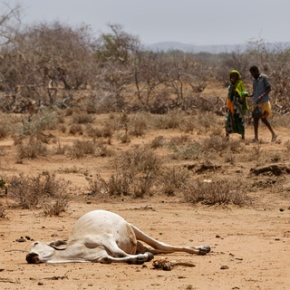 Desperate herders lose animals, hope amid drought in Kenya