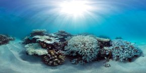 Scientists race to prevent wipeout of world's coralreefs