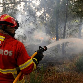 Forest fire kills 61 in Portugal; search on for morebodies