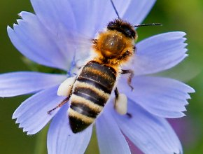 Where's the buzz? German study finds dramatic insectdecline