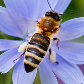Where's the buzz? German study finds dramatic insect decline
